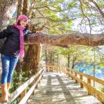Puerto Blest e Los Cantaros: o melhor passeio de Bariloche