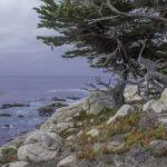 O que Fazer em Monterey, Califórnia