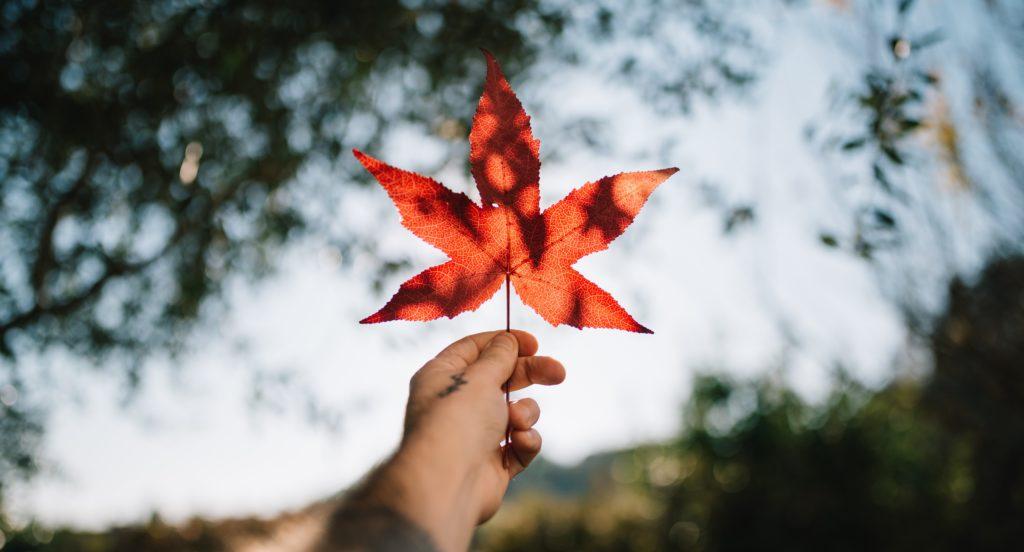 visto-canadense-eletronico