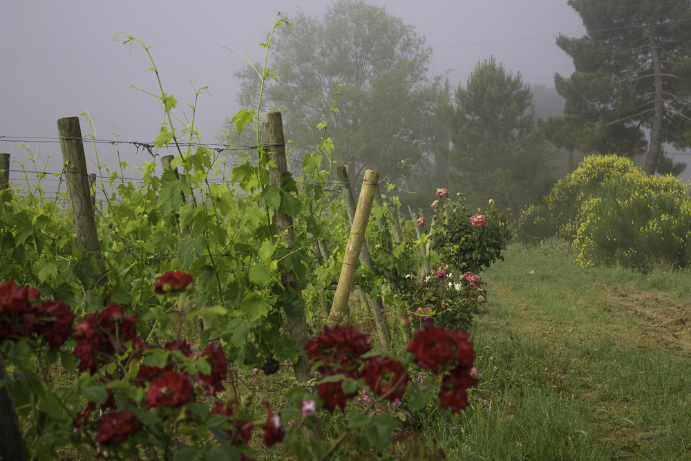 Val d'orcia Toscana onde ficar