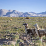 Atacama: guia do deserto mais lindo do mundo!